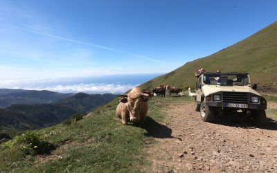 Discover Madeira on Jeep