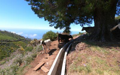 Levadas Walks in Madeira Island
