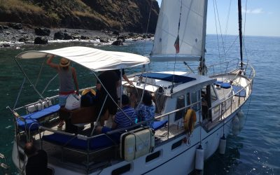 Dolphins and Whale Watching in the Madeira Islands